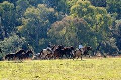 Cowboys Herding Running Wild Horses. Horseback riders herding galloping wild horses in a stunningly beautiful Australian landscape royalty free stock photo