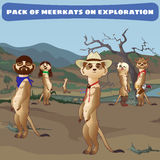 Cowboys meerkats on guard in the wild West Royalty Free Stock Images