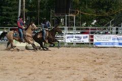 Cowboys am Rodeo Stockfotografie