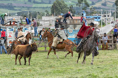 Cowboys roping a bull at a rural rodeo in Ecuador. June 3, 2017 Machachi, Ecuador: cowboys roping a bull in a rural rodeo in the Andes region Stock Photos