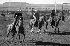 Cowboys sur des chevaux photographie stock libre de droits