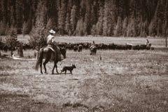 Cowboys, veedrijfsters, en 'cowdogs' Stock Afbeelding