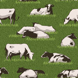 Cowcolorpattern Stock Photography