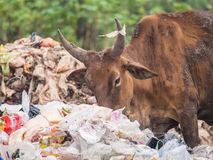 Cowfeed on the waste pile. Cow chip vegetation on the waste pile Stock Photo