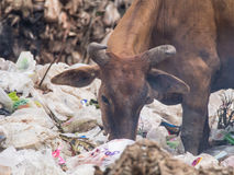 Cowfeed on the waste pile. Cow chip vegetation on the waste pile Royalty Free Stock Photography