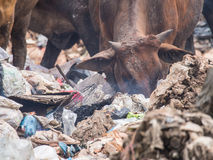 Cowfeed on the waste pile. Cow chip vegetation on the waste pile Royalty Free Stock Images