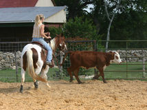 Cowgirl. A blond haired woman riding a chestnut and white paint horse following a brown cow with a bald white face Stock Photo