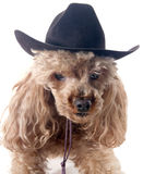 cowgirl Arkivfoton