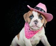 Cowgirl buldoga szczeniak obrazy stock