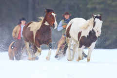 Cowgirl and Cowboy moving horses back to ranch Stock Photos
