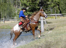 Cowgirl Emerging From Pond. Cowgirl on pinto horse emerging from pond stock image