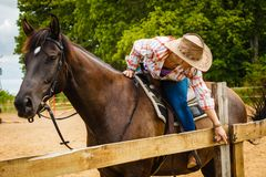 Cowgirl getting horse ready for ride on countryside stock image