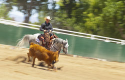 Cowgirl Herding Calf. 2013 RANCHARRAH Cow Horse Classic Royalty Free Stock Photo
