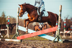 Cowgirl i koń Obraz Stock