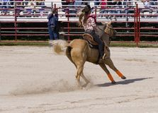 Cowgirl Riding a Horse. Cowgirl riding on her horse at the rodeo Royalty Free Stock Images