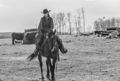 Cowgirl som rider hennes häst Fotografering för Bildbyråer