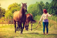 Cowgirl standing next to brown horse friend. Taking care of animals, love and friendship concept. Cowgirl in checkered shirt leading brown horse on sunny day royalty free stock photos