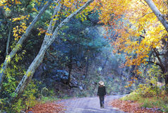 A Cowgirl Walks a Forest Road in the Fall Stock Photo