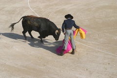 """The Dance - Bullfight. In France's Camargue Bulls are a passion and a way of life.""""But while a bull destined for the Spanish corrida (bullfight&# Royalty Free Stock Photography"""