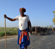 Cowherd standing in the middle of road. Sanand Highway, Gujarat on 6th April, 2012 - Local villager cowherd standing in the middle of the highway road herding royalty free stock photo