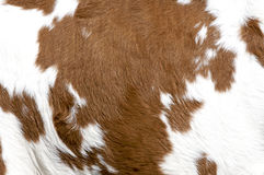 Cowhide. Close up view of cowhide texture Stock Photography