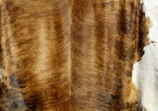 Cowhide Royalty Free Stock Photo