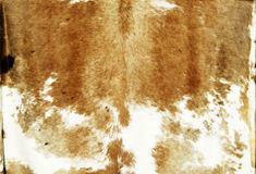 Cowhide. Tanned cowhide on display at a street fair Royalty Free Stock Photography