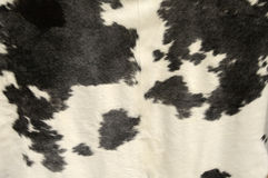 Cowhide Stock Photos