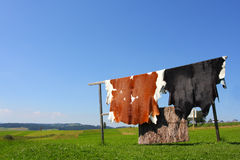 Cowhide. Drying in the sun Royalty Free Stock Photography