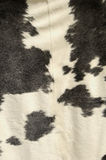 Cowhide. A tanned cowhide on display Stock Photo