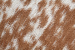 Cowhide brown Stock Image