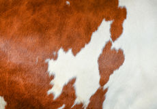 Cowhide close Royalty Free Stock Photo