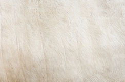 Cowhide close Stock Photo