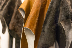Cowhide. Color choice of hanging cowhide Stock Image