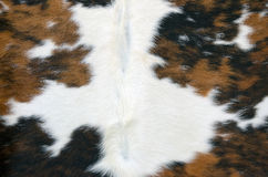 Cowhide Royalty Free Stock Images