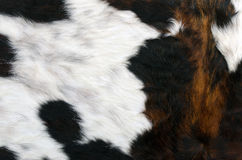 Cowhide. Cow coat texture of a brown cow Royalty Free Stock Image