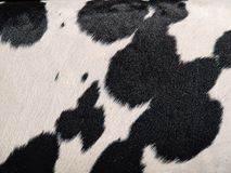 Cowhide hair cow skin black and white background Royalty Free Stock Photos