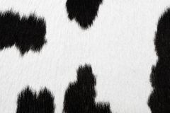 Cowhide texture Royalty Free Stock Photo