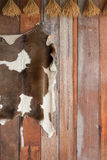 Cowhide on Wooden Wall Royalty Free Stock Image