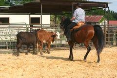 cowhorse ΙΙ Στοκ φωτογραφία με δικαίωμα ελεύθερης χρήσης