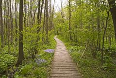 Cowles Bog. In the spring. Dunes State Park, Indiana Royalty Free Stock Images