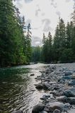 The Cowlitz River. The Colitz River near the La Wis Wis Campground in the state of Washinton Royalty Free Stock Photos