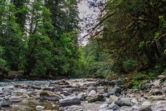 The Cowlitz River. The Colitz River near the La Wis Wis Campground in the state of Washinton Royalty Free Stock Image