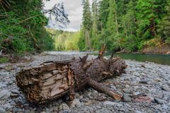 The Cowlitz River Stock Photography