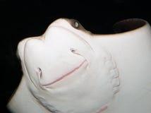 Cownose Strahl-Unterseite geschossen mit Blinken stockfoto
