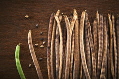Cowpea Royalty Free Stock Images