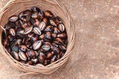 Cowrie Seashells Stock Image