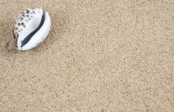Cowrie Shell on Sand Stock Photography