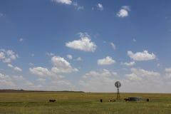 cows ветрянка Стоковые Изображения