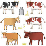 Cows. Set of cows on the white background. Various colours, various mood Royalty Free Stock Image